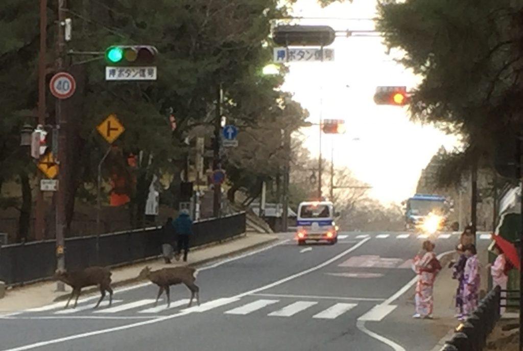 奈良のシカ②