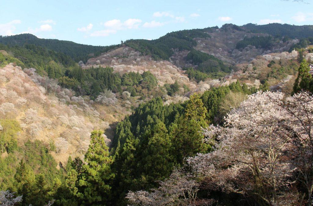 一面に桜が広がる吉野山